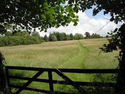 Path Pic Original