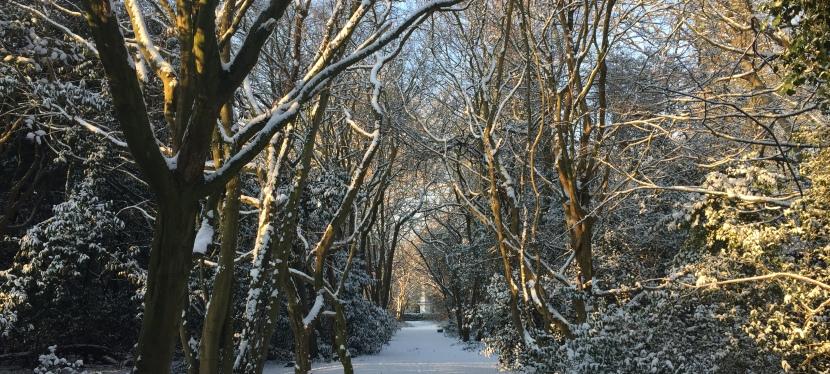A Walk in the Woods – Looking forShinrin-yoku.