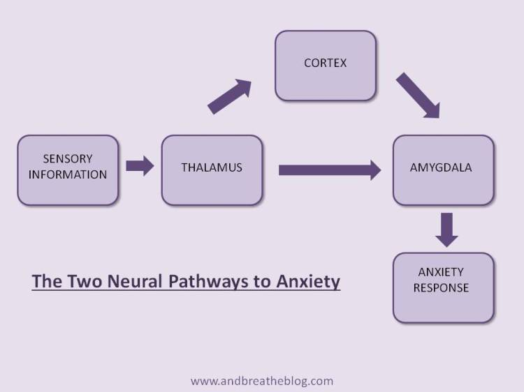 The Two Neural Pathways to Anxiety
