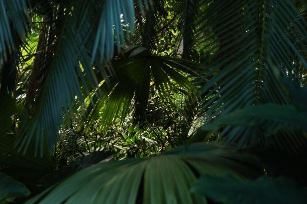 Jungle - Photo by Nathan Mcgregor on Unsplash